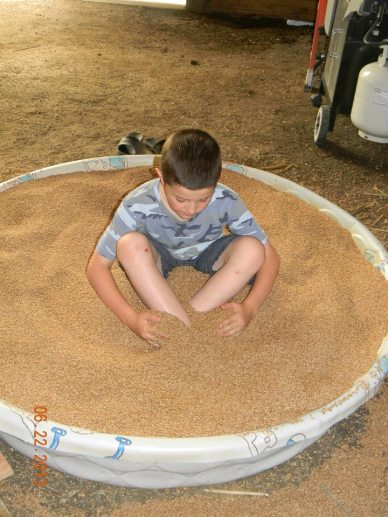 Our wheat pool in the petting zoo area