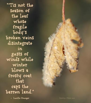 CarolynCares Frosty Leaf
