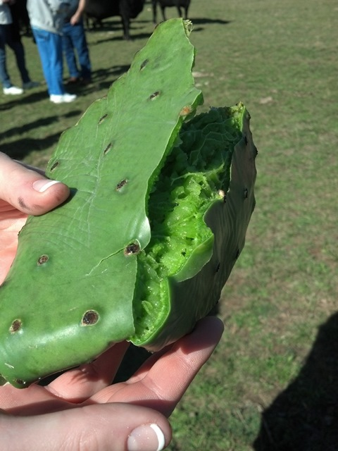 CarolynCares Cactus